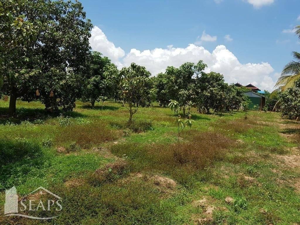 លក់ ដីទ្បូ Kampot